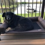 cute fluffy black dog on recycled dog bed